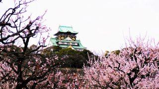 大阪城公園「梅林」2017年の見頃は?開花状況はここでチェック