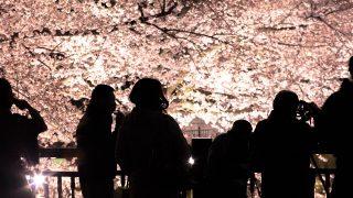 大阪のお花見スポット!ライトアップおすすめ5選を紹介