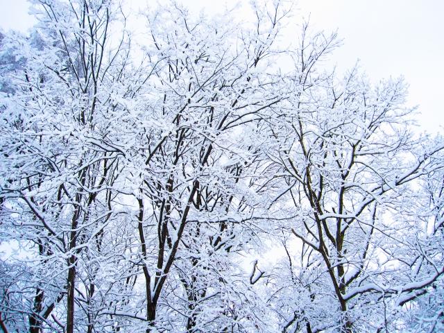 真冬日と冬日の違いは?どれぐらい気温に違いがあるのか?
