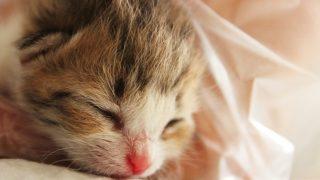 野良猫を飼うなら注意点は?何をすればいいのか解説してます